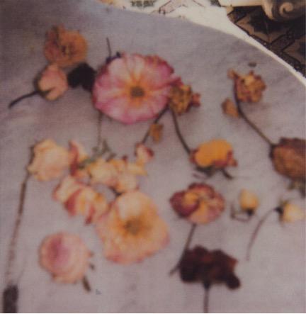 Light Flowers VI, 2008